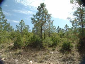 7: Timberon property foreclosure land in New Mexico
