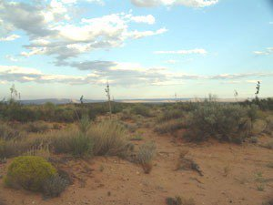 52: 14 lot New Mexico property Texas near No Reserve