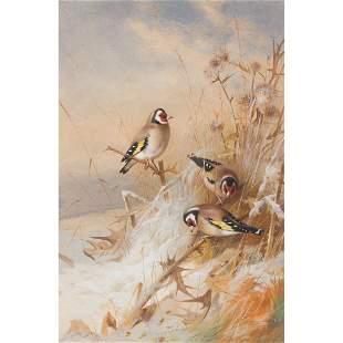 ARCHIBALD THORBURN (SCOTTISH 1860-1935) GOLDFINCHES IN