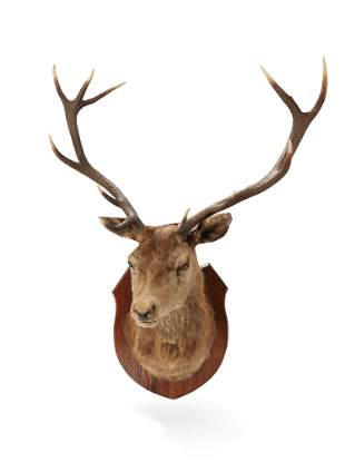 Y A TWELVE POINT 'ROYAL' STAGS HEAD 20TH CENTURY