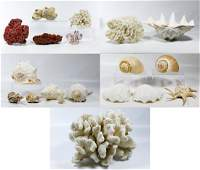 Sea Shell and Coral Assortment