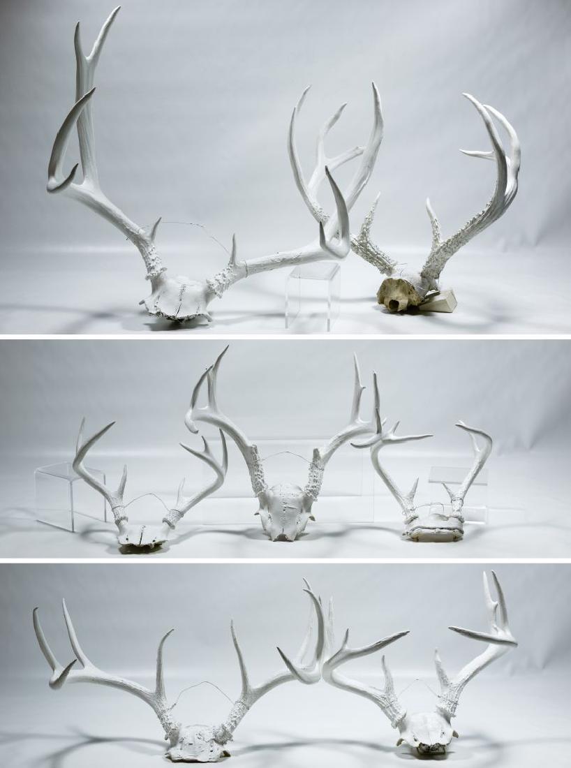 Painted Deer Antler Assortment