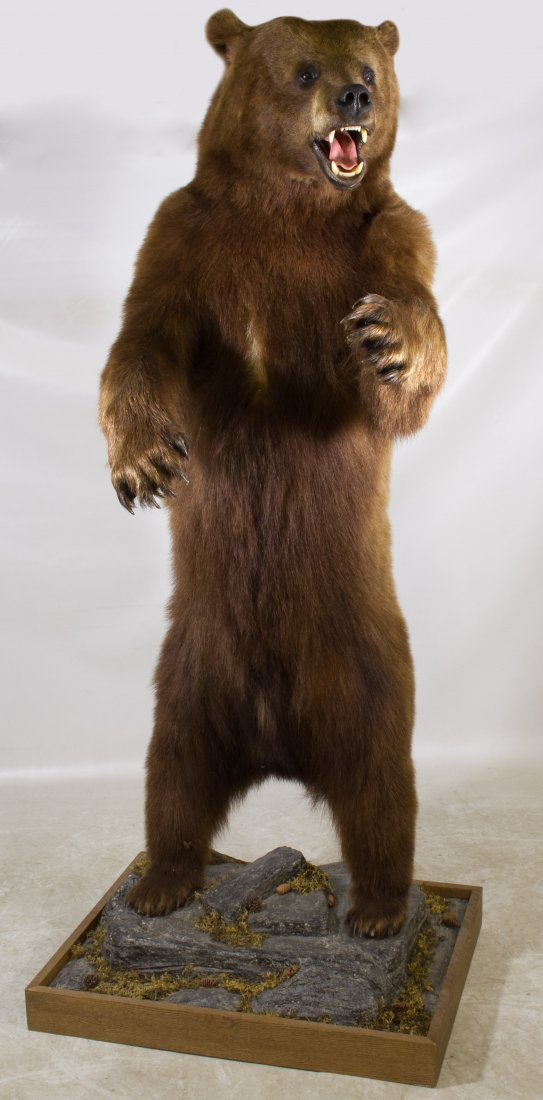 Full Body Mount Standing Brown Bear Taxidermy