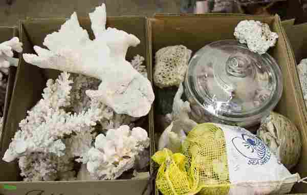 Coral and Sea Shell Assortment