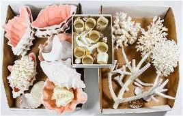 Ceramic Shell Bowls, Coral and Seashell Assortment