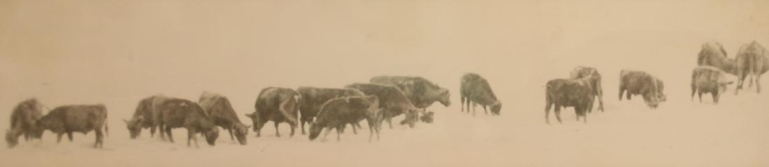 MYRA KYLE COW PRINT
