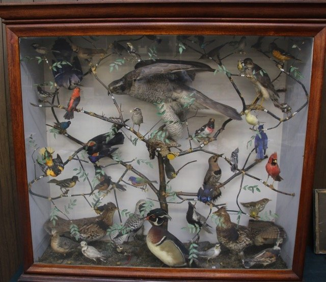ANTIQUE BIRD DIORAMA