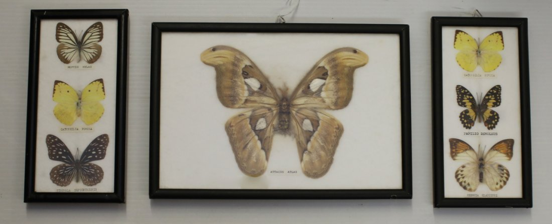 3 - FRAMED BUTTERFLY DISPLAYS