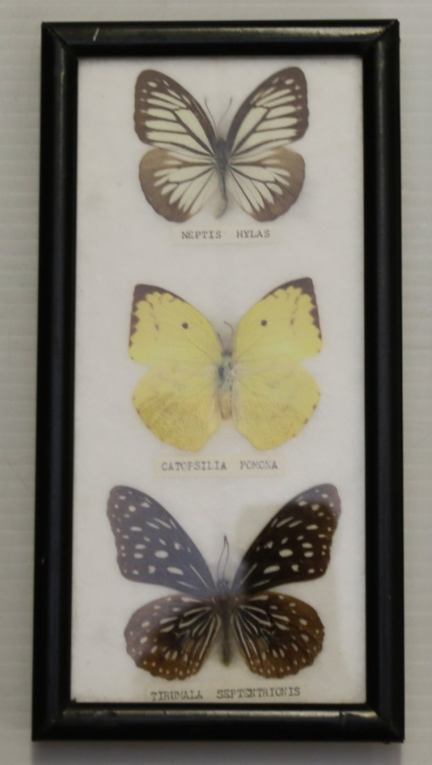3 - FRAMED BUTTERFLY DISPLAYS - 2