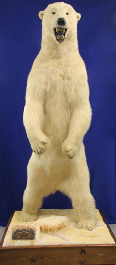 FULL SIZE STANDING POLAR BEAR MOUNT