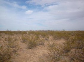 5Z: 1.25 ACRE TEXAS RANCH LAND  NO RESERVE! $ 100 start