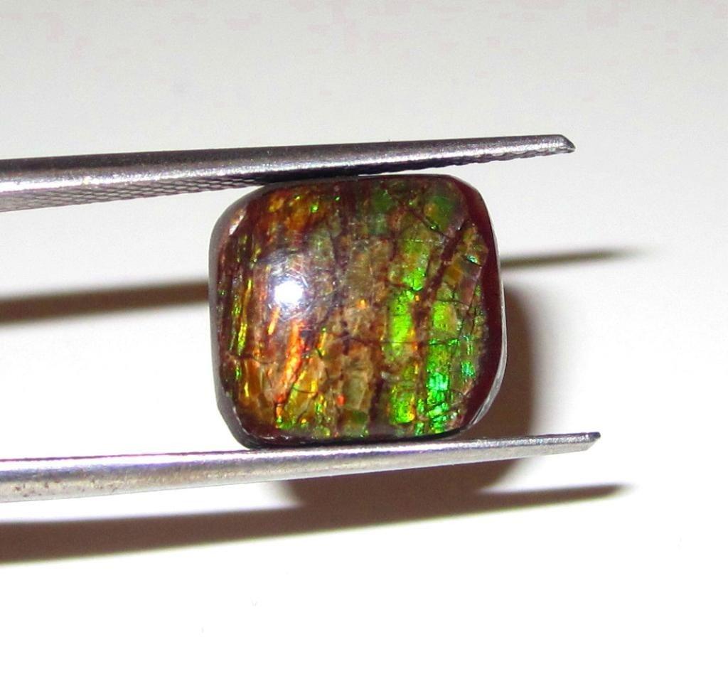 1W: 12mm x 11mm Ammolite Specimen