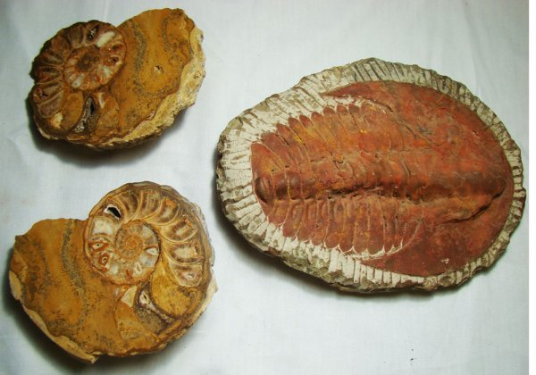 101: Lot of 3 fossils. First from Cretaceous Period