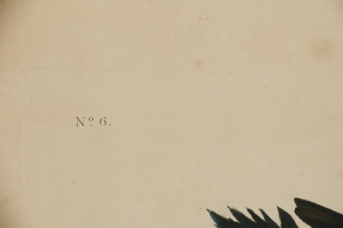 JOHN JAMES AUDUBON (NY, 1785-1851) - 3