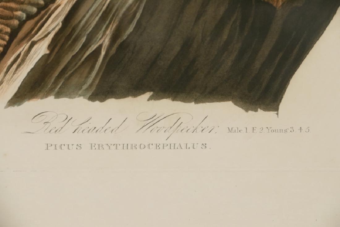 JOHN JAMES AUDUBON (NY, 1785-1851) - 5