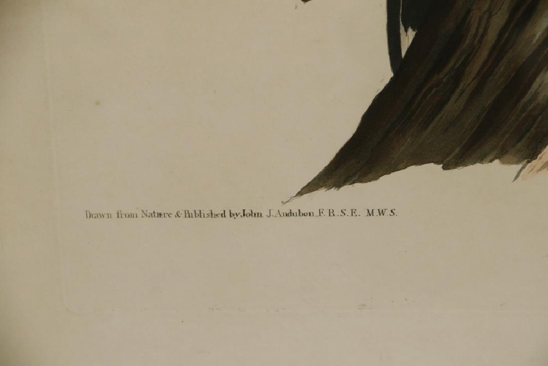JOHN JAMES AUDUBON (NY, 1785-1851) - 6