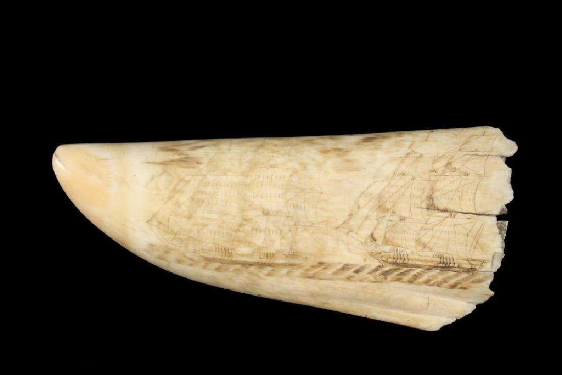 19TH C. SCRIMSHAWN WHALE'S TOOTH