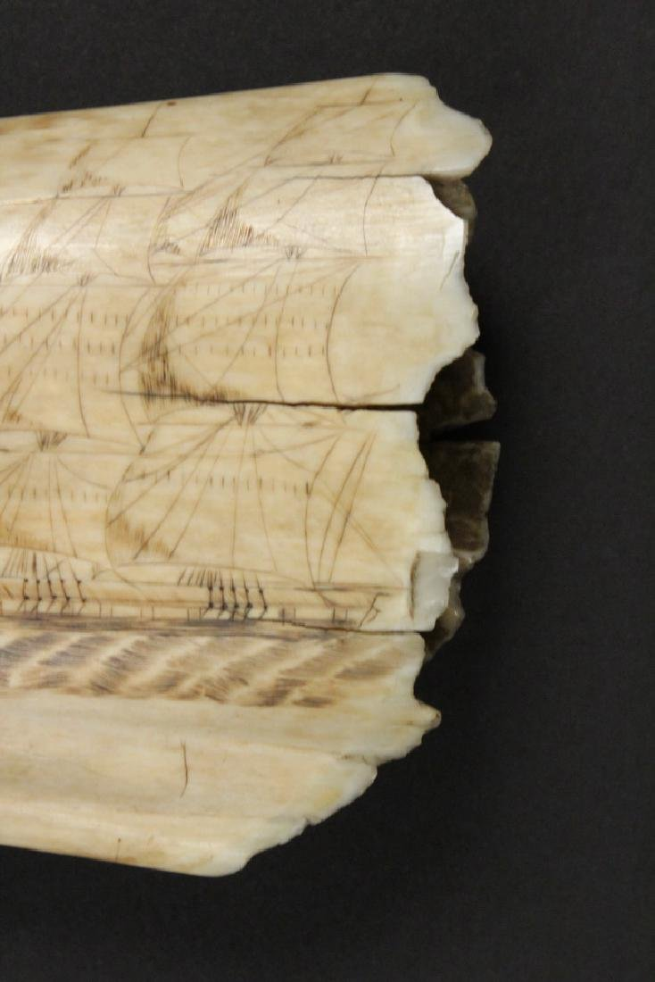 19TH C. SCRIMSHAWN WHALE'S TOOTH - 3