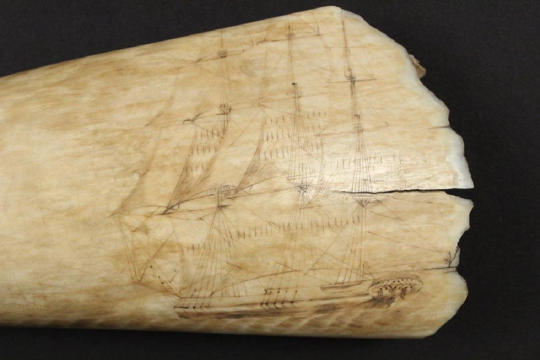 19TH C. SCRIMSHAWN WHALE'S TOOTH - 5