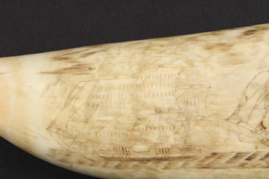 19TH C. SCRIMSHAWN WHALE'S TOOTH - 7