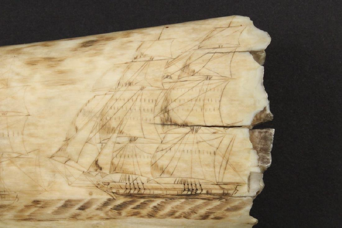19TH C. SCRIMSHAWN WHALE'S TOOTH - 8