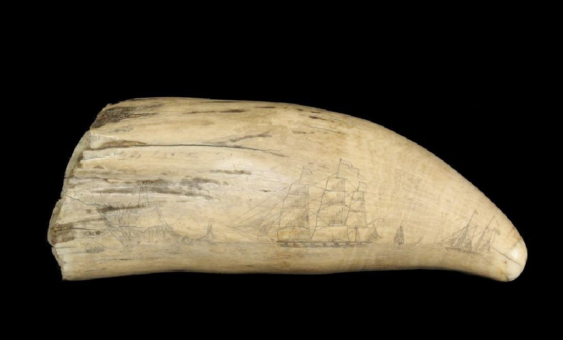 SCRIMSHAWN WHALE'S TOOTH
