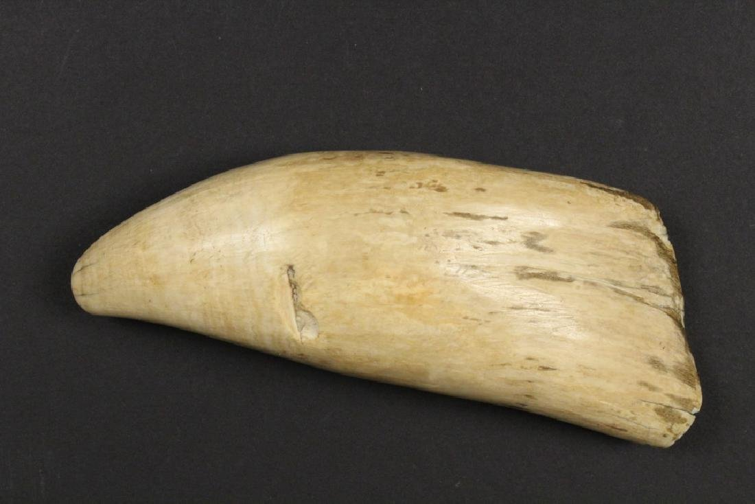 SCRIMSHAWN WHALE'S TOOTH - 2