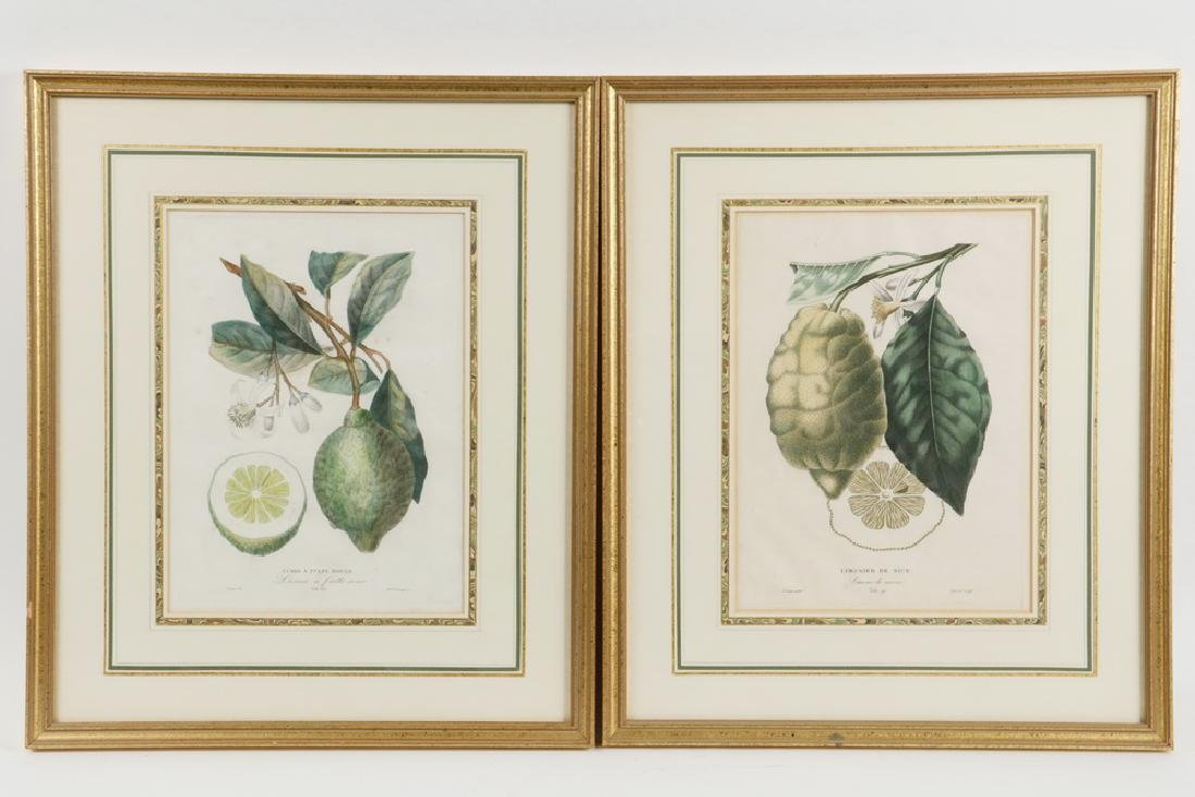 (2) CITRUS ENGRAVINGS BY POITEAU (FRANCE, 1766-1856) &
