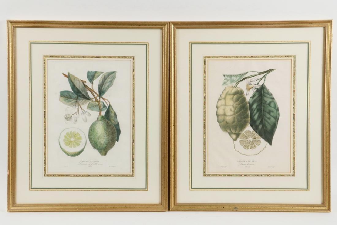 (2) CITRUS ENGRAVINGS BY POITEAU (FRANCE, 1766-1856) &
