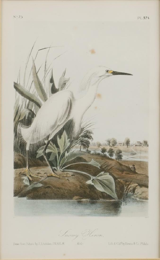JOHN JAMES AUDUBON (NY/FRANCE, 1785-1851) - 2