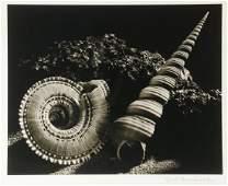 RUTH BERNHARD (NY/CA/GERMANY, 1905-2006)