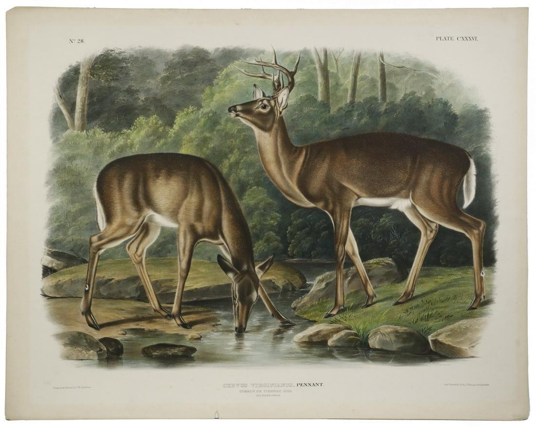JOHN JAMES AUDUBON (NY/FRANCE, 1785-1851)