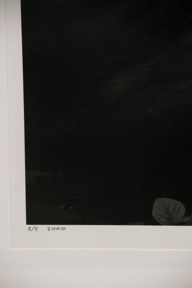 """CLYDE BUTCHER (FL/CA, 1942 - ) - """"Loxahatchee #9"""" - 4"""