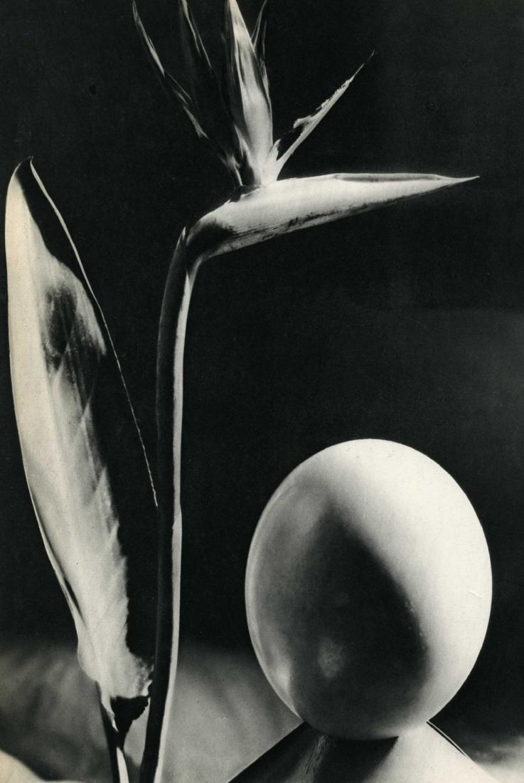 1426: MAN RAY - Oiseau de Fleur de Paradis [descriptive