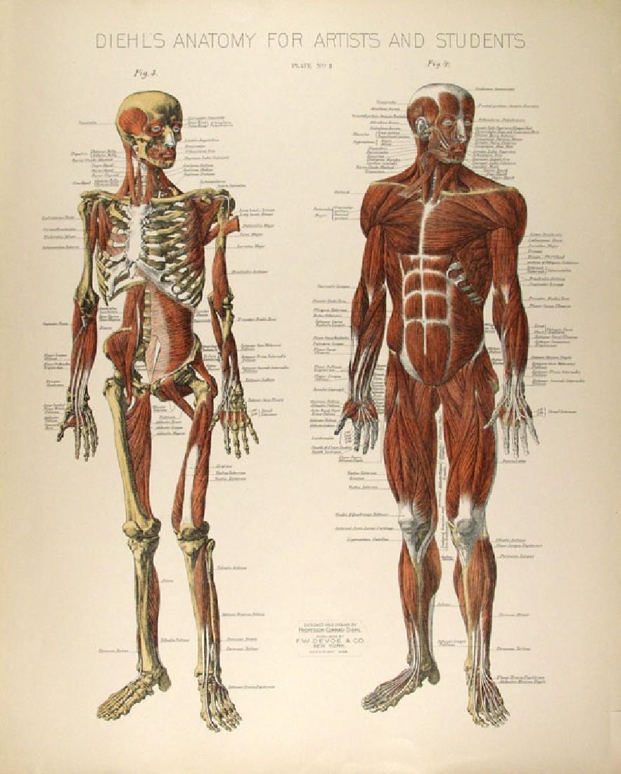 174: CONRAD DIEHL - Diehl's Anatomy for Artists and