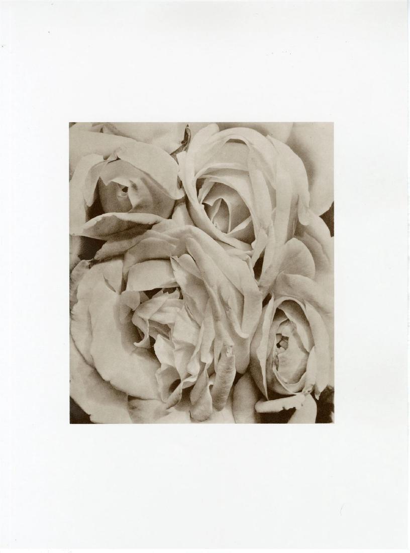 462: TINA MODOTTI - Roses, Mexico