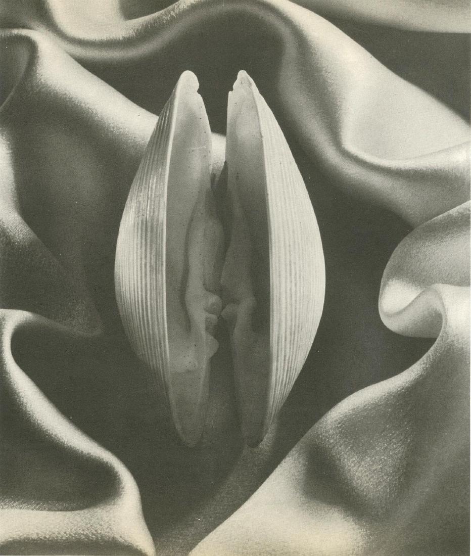 1137: RUTH BERNHARD - Shell in Silk - 2