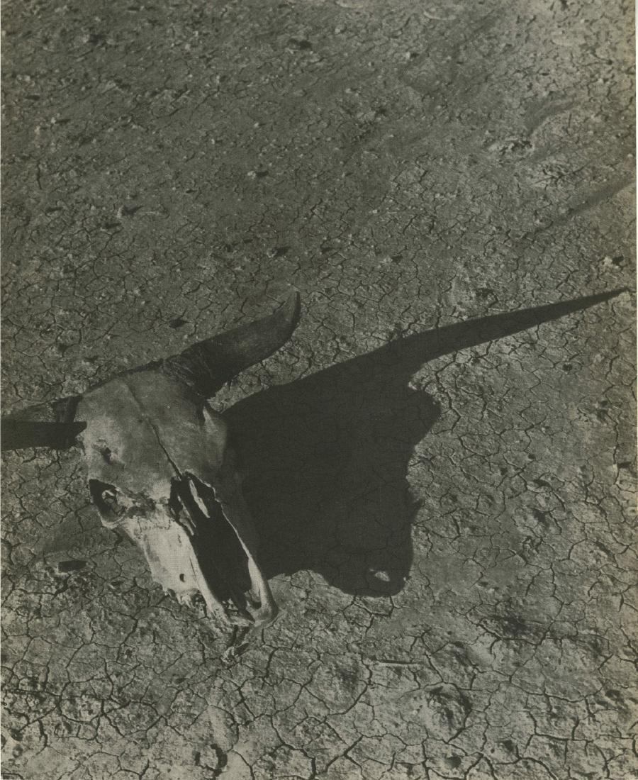 495: ARTHUR ROTHSTEIN - Skull of Steer, Badlands, South