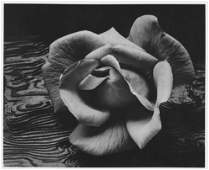 ANSEL ADAMS - Rose and Driftwood, San Francisco,