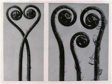 56: KARL BLOSSFELDT (German) Vintage photogravure