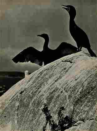 ELIOT PORTER - Double Crested Cormorants, Colt's Head