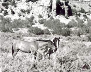 SHARI BRUNTON - Bush Buddies: Wild Horses of New Mexico