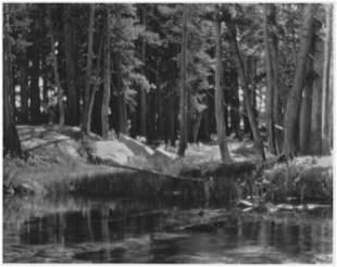 ANSEL ADAMS - Grove, Lyell Fork, Merced River,