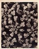 308: KARL BLOSSFELDT (German) Original vintage photogra
