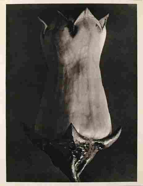 KARL BLOSSFELDT (German) Original vintage photogra