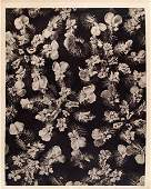1628: KARL BLOSSFELDT (German) Original vintage photogr