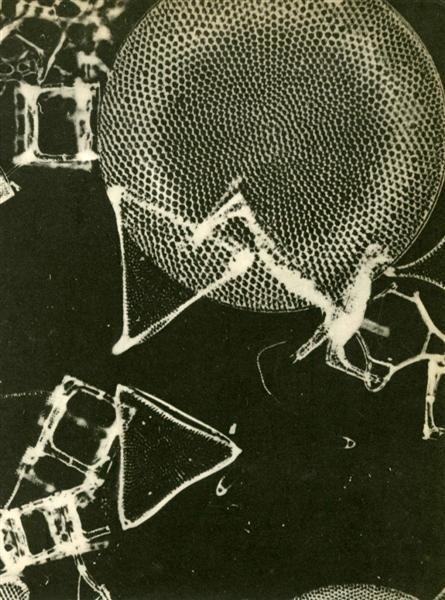 12: LAURE ALBIN-GUILLOT - Original vintage photogravure
