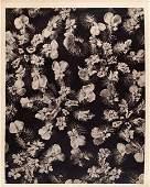 1621: KARL BLOSSFELDT - Original vintage photogravure