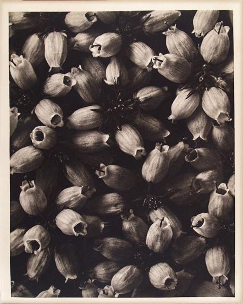 1680: KARL BLOSSFELDT - Original vintage photogravure