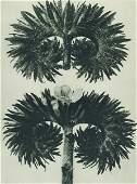 1797: KARL BLOSSFELDT - Original vintage photogravure